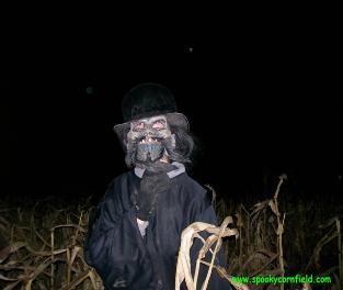 Spooky Stalks Haunted Cornfield Pictures