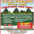 Christmas Time at Yule Forest