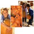 Yule Forest Pumpkin Patch Pictures