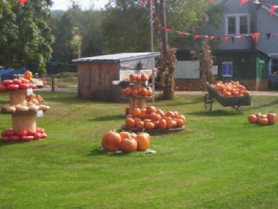 Fall Harvest Days Pictures