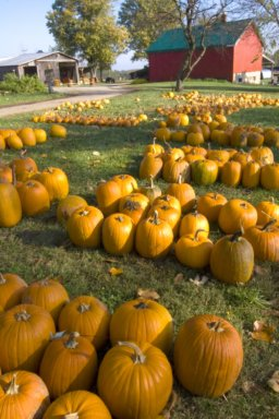 Pumpkin Days on the Farm Pictures