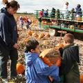 Black Island Farms Harvest Festival Pictures