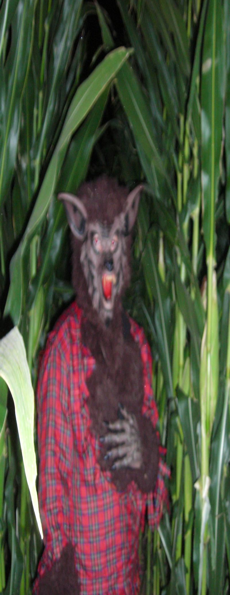werewolf in haunted maze