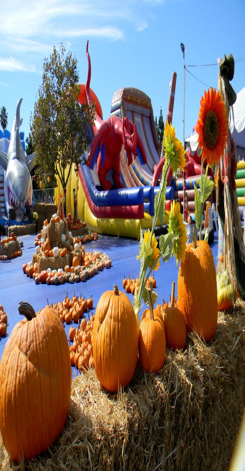 PPP Pumpkin Patch