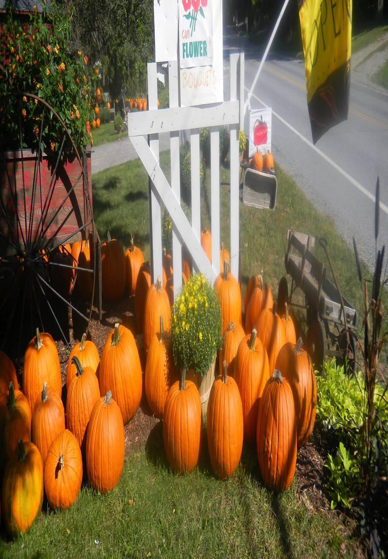 U-Pic Pumpkin Patch