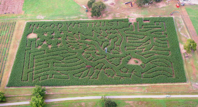 Find Corn Maze In Montgomery Texas P 6 Farms Corn Maze In Montgomery Texas