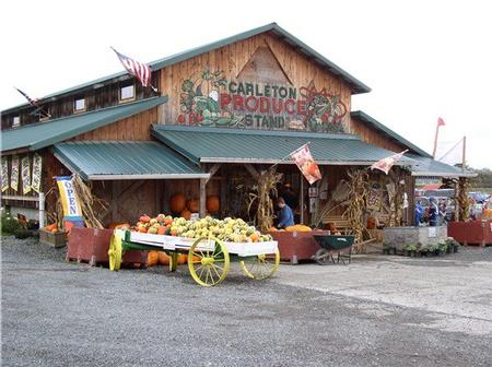 Image result for carleton farms pumpkin patch